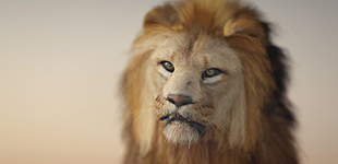 safari_lion